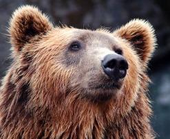 crypto_strong_bear