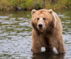 bear_market_benefit_dapps