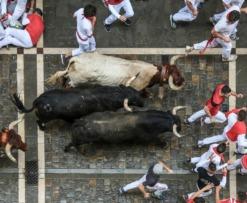 crypto bull run