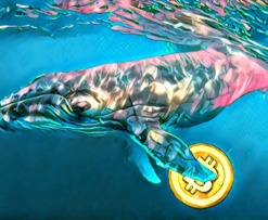 Bitcoin BTC whales SegWit
